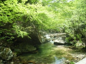 Mountain stream with fresh green